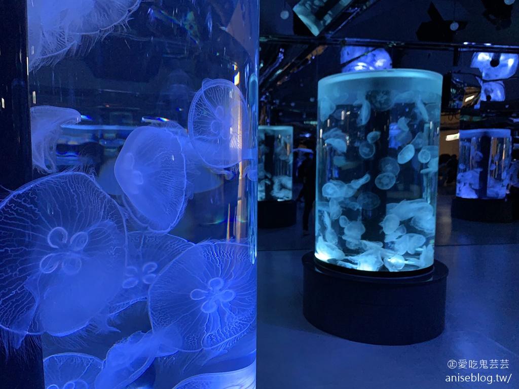 北台灣最大水族館Xpark即將開幕,萌企鵝陪你喝咖啡,超可愛😍😍😍