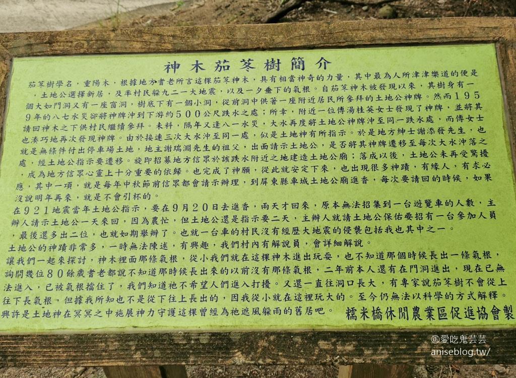 茄苳神木,300歲老神木樹洞裡藏著台灣!😍