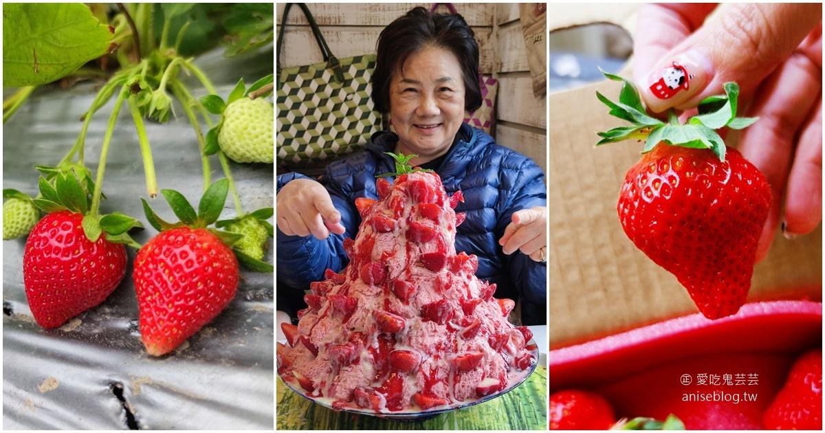 網站近期文章:大湖草莓半日遊 | 春不老農園、花間集巨無霸草莓冰、醉心亭客家料理、卓也小屋書園子