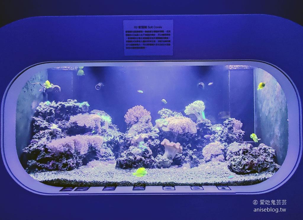 澎湖景點推薦 | 澎湖水族館,親子、雨天備案、避暑好去處,最推薦大洋池餵食秀!