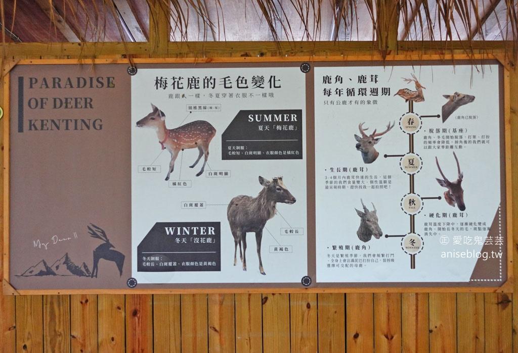 不用到奈良!鹿境梅花鹿生態園區,和梅花鹿親密互動,豪可愛🦌